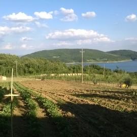 Pranzo di Ferragosto in Agriturismo Arezzo!