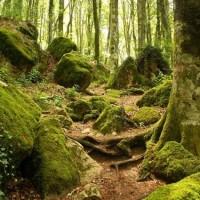 Parco delle Foreste Casentinesi - Foresta Sacra
