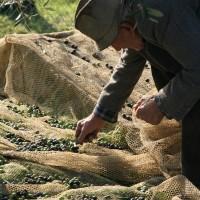 Agriturismo Le Ceregne Bio - L'oliveto