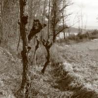 Agriturismo Le Ceregne Bio - coltivare biologico