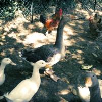 agriturismo-bio-con-animali