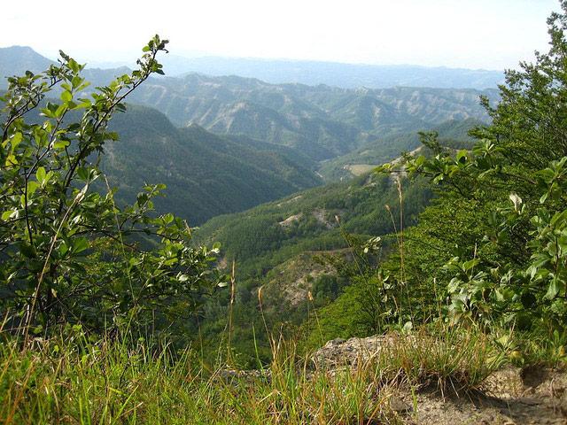 Foreste Casentinesi (AREZZO) - Toscana