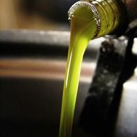 Olio extra verigine di oliva da Olivo Gentile della Valtiberina