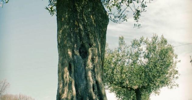L'Agriturismo Le Ceregne BIO partecipa agli Oscar Green 2013