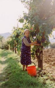 Vendemmia-Toscana-uva