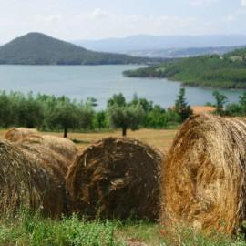 Offerta last minute estate! Giugno | Agriturismo Arezzo