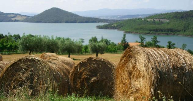 Offerta last minute estate! Giugno – Luglio 2017 | Agriturismo Arezzo