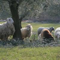 Offerta Menù di Pasqua e Pasquetta | Agriturismo Toscana