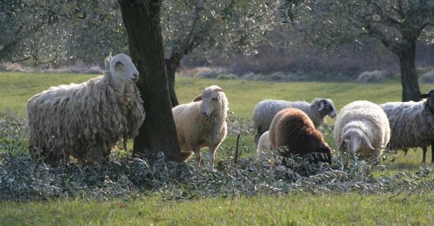 Offerta Menù di Pasqua e Pasquetta 2017 | Agriturismo Toscana