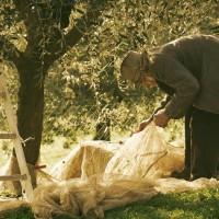 degustazione olio extra vergine di oliva