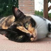 Agriturismo Pet Friendly: in viaggio con il cane e il gatto